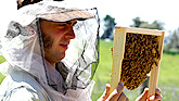Natural Beekeeping Australia Courses