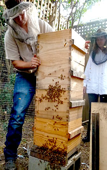 Natural Beekeeping Students Visit Belinda's Urban Apiary