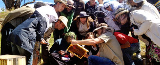Natural Beekeeping Australia Courses - Warre Beehives