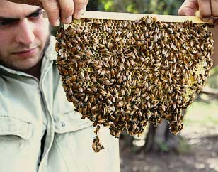 Natural Beekeeping Australia Tim Malfroy and Warre Frame