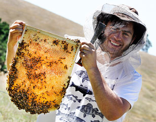 Natural Beekeeping Australia Warre Honey Frame