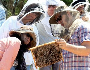 Natural Beekeeping Australia Students Milkwood Apiary