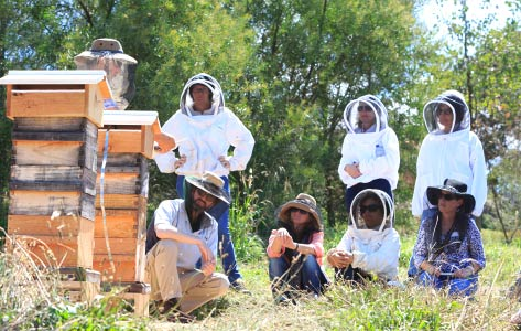 Natural Beekeeping Courses Malfroy