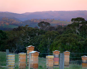 Natural Beekeeping Australia About Us