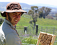 Natural Beekeeping Australia