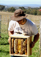 Natural Beekeeping Australia Tim with Full Warre Box
